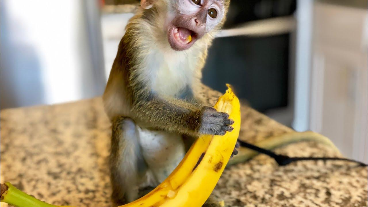 Image result for monkey eating banana